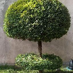 Marco Gardening en Mataderos